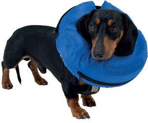 Inflatable Dog Collars Australia